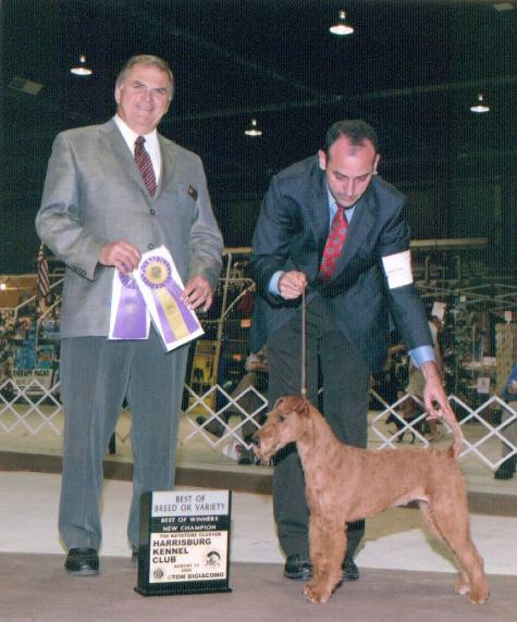 Clover earned her Championship on August 13, 2006 at the Harrisburg Kennel CLub's summer show from Mr. Lawrence E. Stanbridge.
