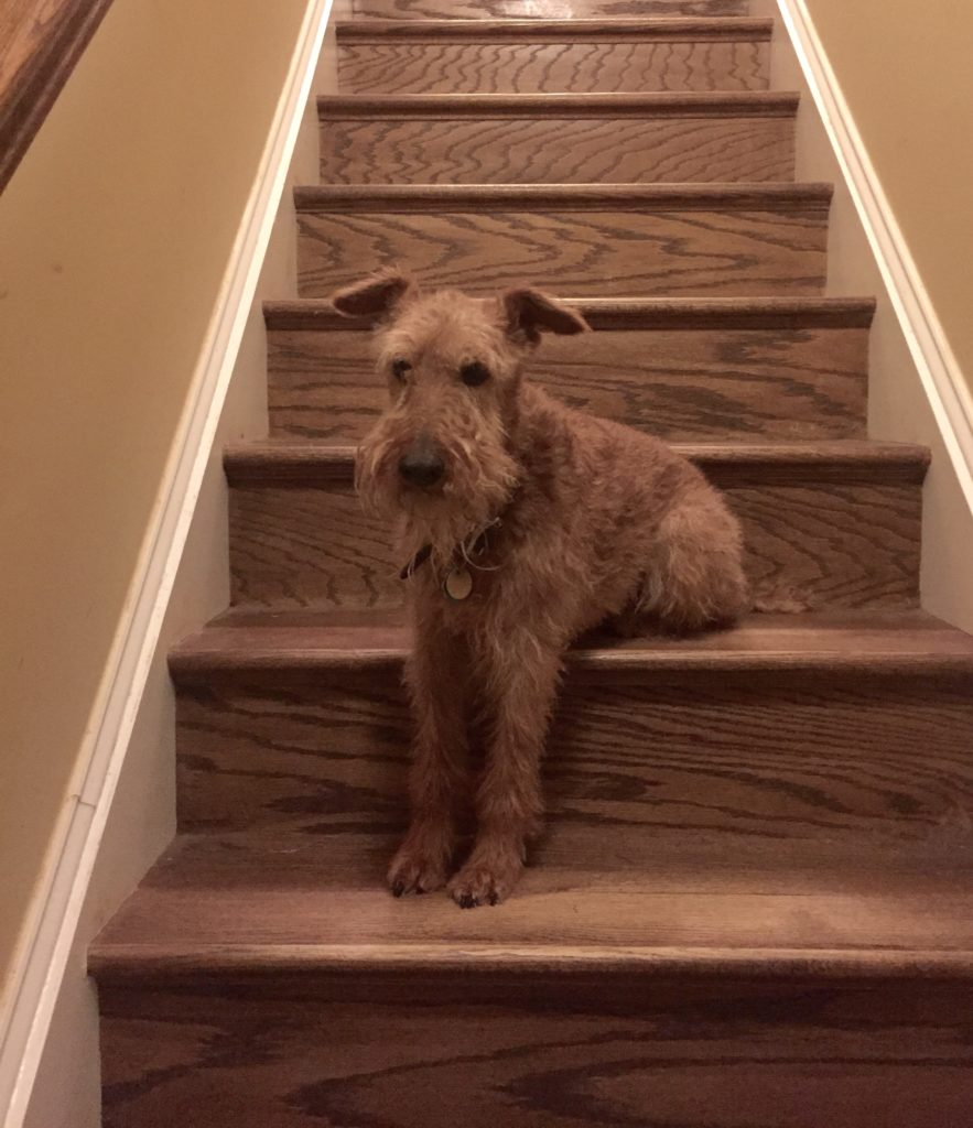 Clover on stairs